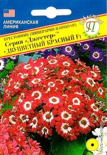 Крестовник двухцветный выращивание 58